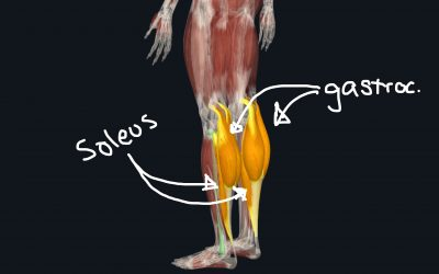 Best Leg exercises and lower extremity workouts