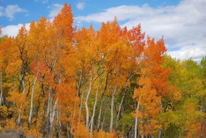 how to stay healthy and active during fall