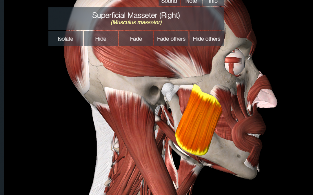 What You Are Missing with Jaw Pain and TMJ Pain