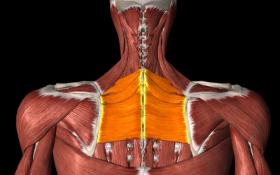 How to Get Rid of Pain Between The Shoulder Blades